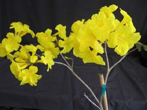 Tabebuia chrysotricha, Golden Trumpet Tree